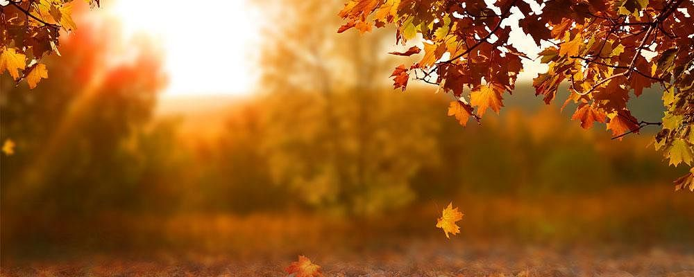Top 8 Autumn Must Haves